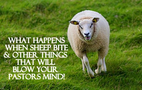 What Happens When Sheep Bite and Other Things That Will Blow Your Pastors Mind